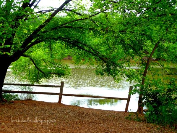 martin nature park 240